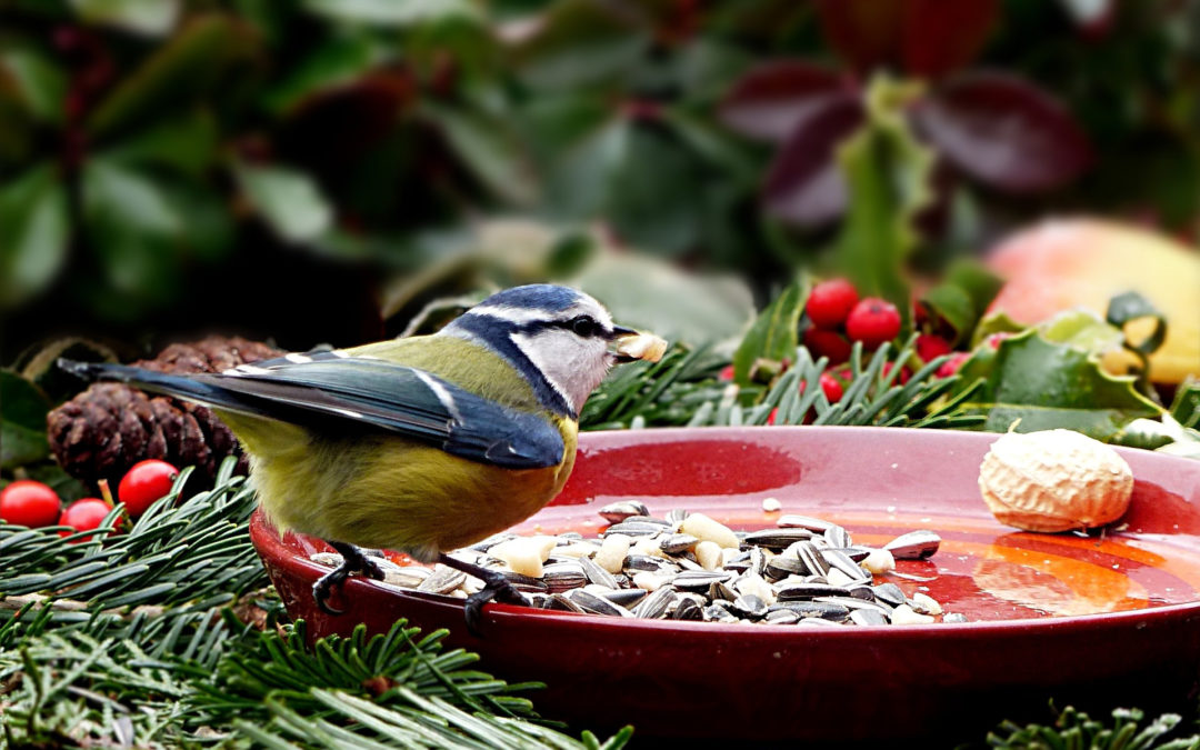 Große Auswahl an Vogelfutter