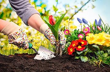 Blumen richtig pflanzen und pflegen